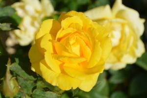 Rahoittajan yritysrahoitus saa sinut puhkemaan kukkaan